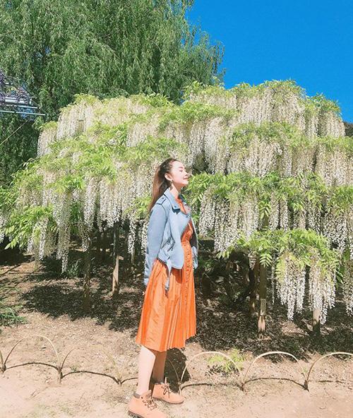 Minh Hằng đi du lịch Nhật Bản không quên sống ảo cùng hoa tử đằng.