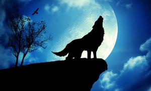 Trắc nghiệm: Lá bài Ma sói nào có thể đọc vị tính cách của bạn?