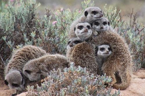 Loại động vật hoang dã nào tượng trưng cho khí chất 12 chòm sao? - 2