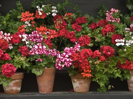 Biết những loài hoa này tên gì bạn quả là thiên tài (3) - 1