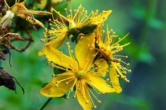 Biết những loài hoa này tên gì bạn quả là thiên tài (3) - 5
