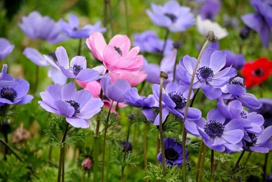Biết những loài hoa này tên gì bạn quả là thiên tài (3) - 8