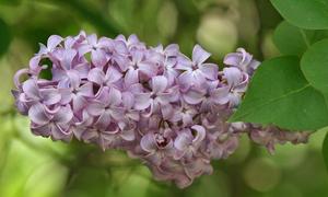Biết những loài hoa này tên gì bạn quả là thiên tài (2)