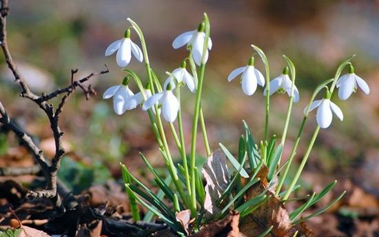 Biết những loài hoa này tên gì bạn quả là thiên tài (3) - 9