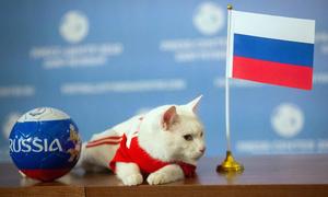 Mèo điếc tiên tri đội yếu nhất bảng thắng trận mở màn