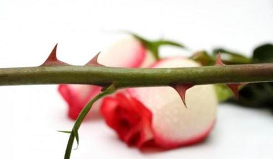 Ý nghĩa các loài hoa, bạn có biết? - 6