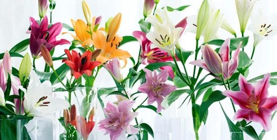 Ý nghĩa các loài hoa, bạn có biết? - 8
