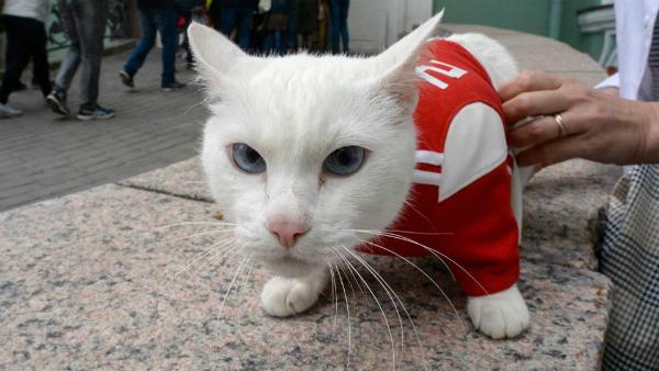 Mèo điếc tiên tri đội yếu nhất bảng thắng trận mở màn - 1