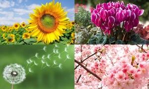 Ý nghĩa của các loài hoa, bạn có biết?