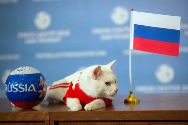 Mèo điếc tiên tri Achilles nổi tiếng nước Nga.