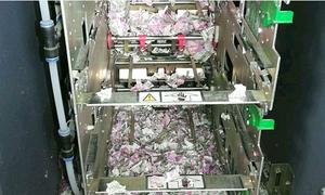 Chuột lẻn vào ATM, gặm 19.000 USD rồi... chết