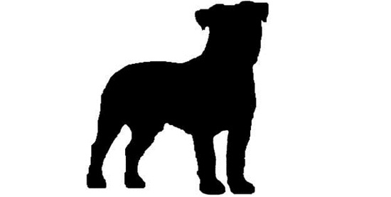 Nhìn bóng cún cưng đoán giống loài - 4