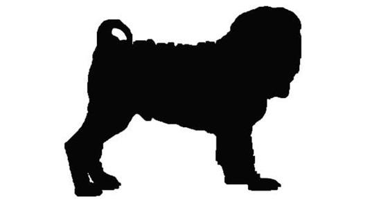 Nhìn bóng cún cưng đoán giống loài - 8