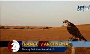 Tiên tri chim ưng dự đoán sốc trận Pháp - Argentina