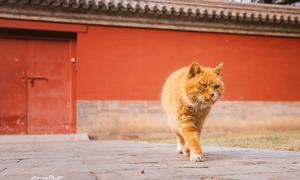 Mèo tiên tri Trung Quốc ra đi sau khi dự đoán đúng 6 trận tại World Cup