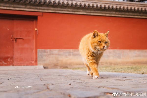 Baidian sống tại bảo tàng, cổng phía tây của Tử Cấm Thành, Bắc Kinh. Ảnh: Weibo