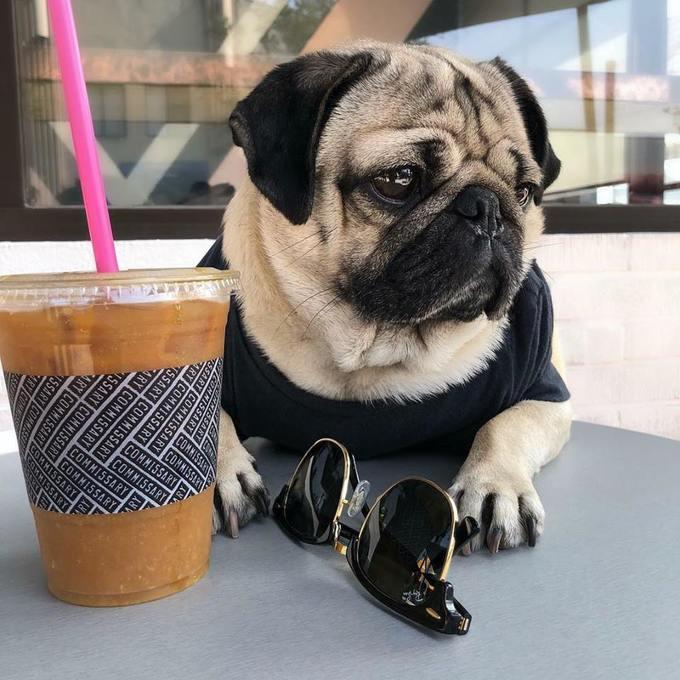 <p> Cafe sang chảnh, kính hàng hiệu mới xứng danh con nhà giàu.</p>