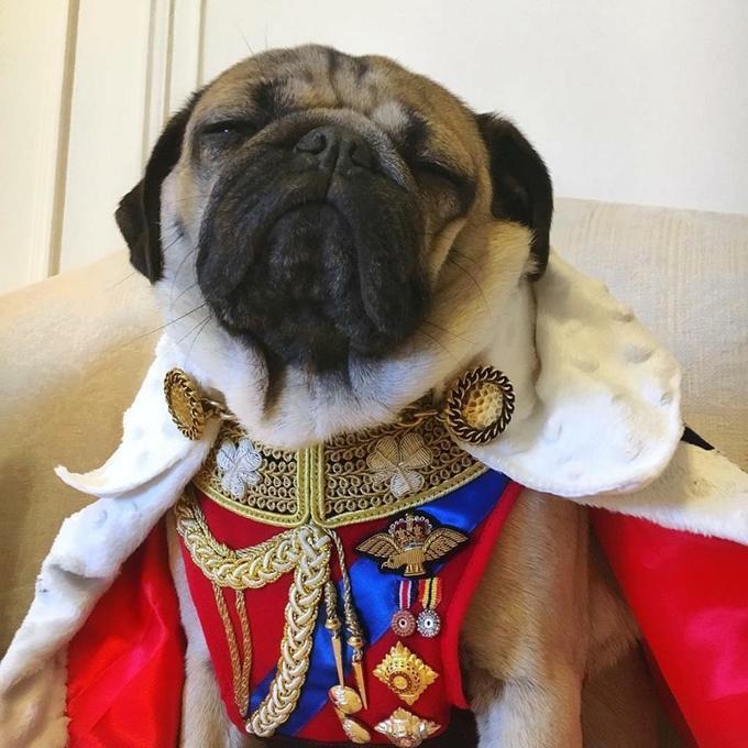 """<p> Nhiều người bình luận: """"Đây đúng là chú chó chuẩn rich dog"""", """"chú chó hoàng tộc"""", """"đẳng cấp của các boss hẳn không phải dạng vừa đâu nhé"""".</p>"""