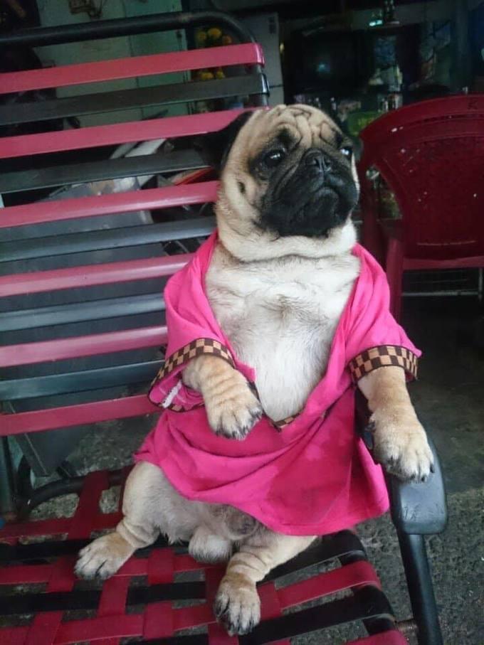 """<p> Những bức ảnh nhận về hơn 9.000 lượt like và hàng nghìn bình luận. Fan được dịp cười ngất với độ """"chanh sả"""" của chú chó từ quần áo đến phụ kiện.</p>"""