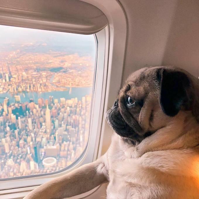 <p> ... thậm chí cả trên máy bay.</p>