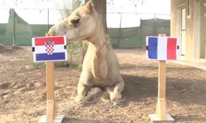 Tiên tri động vật dự đoán sốc về nhà vô địch World Cup 2018