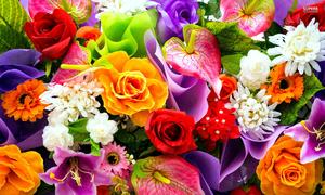 Loài hoa hộ mệnh nào sẽ đem lại may mắn cho 12 chòm sao?
