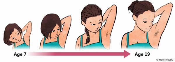 Trong tuổi dậy thì, vùng dưới cánh tay của bạn sẽ mọc tóc.