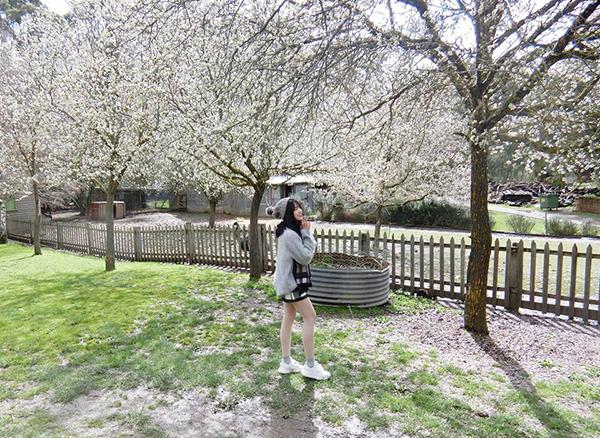 Kiều Trinh xinh như búp bê giữa khung cảnh hoa trắng trời thơ mộng.