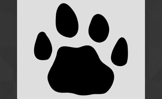 Bạn có thể xác định con vật qua dấu chân? - 8