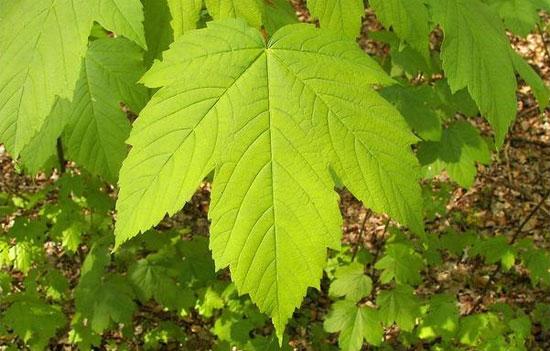 Đây là cây gì?