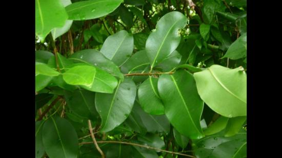 Đây là cây gì? - 10
