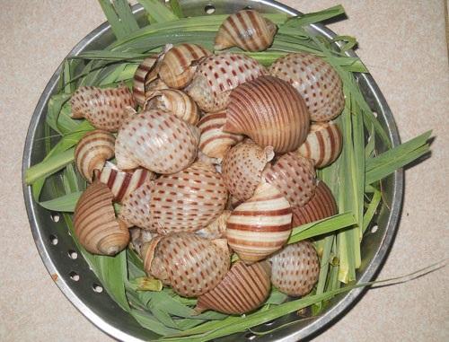 Chỉ có thánh ăn ốc mới phân biệt được các loại ốc này - 8