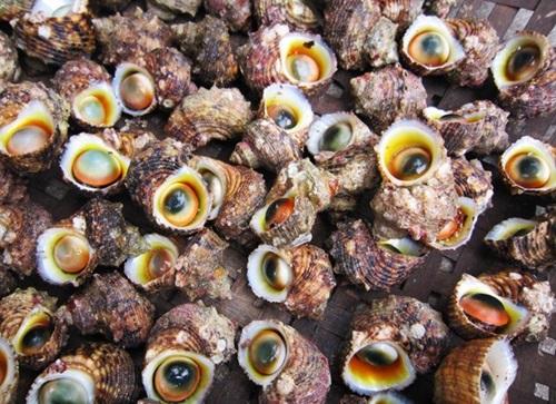 Thể hiện độ sành ăn bằng cách phân biệt các loại ốc biển - 2