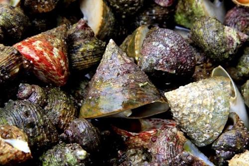 Thể hiện độ sành ăn bằng cách phân biệt các loại ốc biển - 5