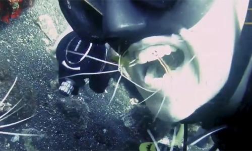 Nhờ tôm đánh răng dưới đáy biển