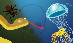 Những loài vật có nọc độc nguy hiểm nhất thế giới