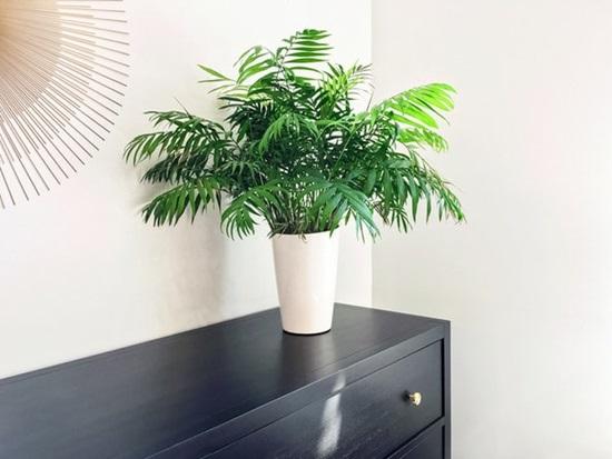 80% người không biết đây là cây gì? - 5