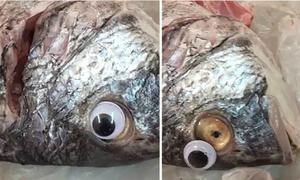 Chiêu bán hàng lạ: Dán mắt nhựa, biến cá ươn thành cá tươi