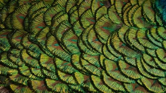 Đoán con vật từ hình ảnh phóng đại - 1