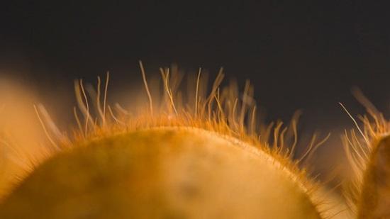 Đoán con vật từ hình ảnh phóng đại - 3