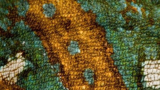 Đoán con vật từ hình ảnh phóng đại - 5