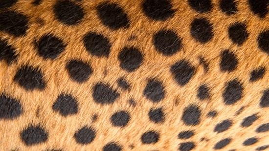 Đoán con vật từ hình ảnh phóng đại - 6