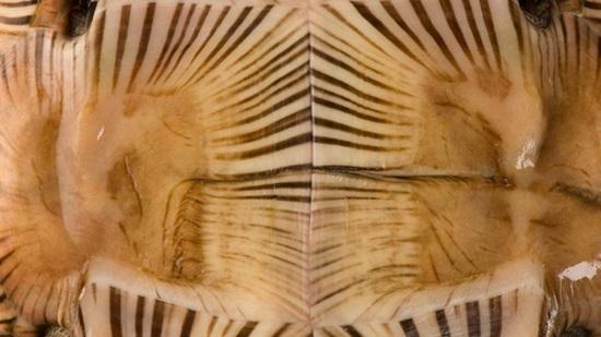 Đoán con vật từ hình ảnh phóng đại - 8
