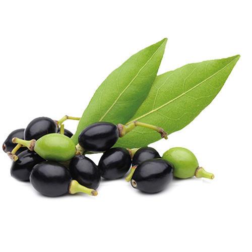 Hương tinh dầu dành cho 12 cung hoàng đạo - 3