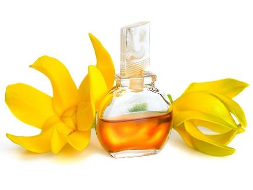 Hương tinh dầu dành cho 12 cung hoàng đạo - 8