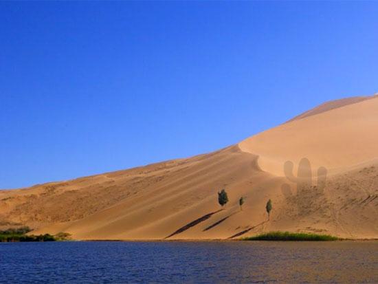 Tinh mắt tìm cây xương rồng trên sa mạc nóng bỏng