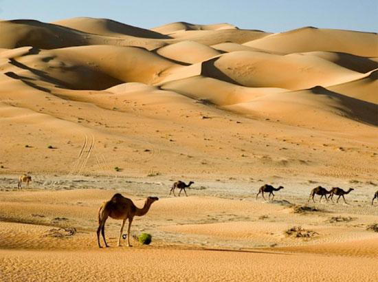 Tinh mắt tìm cây xương rồng trên sa mạc nóng bỏng - 9