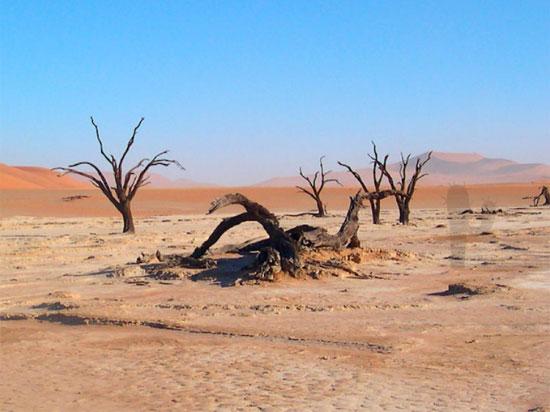 Tinh mắt tìm cây xương rồng trên sa mạc nóng bỏng - 1