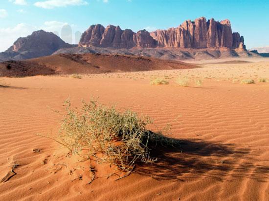 Tinh mắt tìm cây xương rồng trên sa mạc nóng bỏng - 2