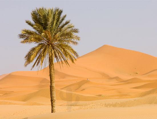Tinh mắt tìm cây xương rồng trên sa mạc nóng bỏng - 3